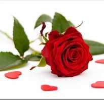 Букет китайская роза