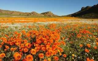 Цветы похожие на герберы