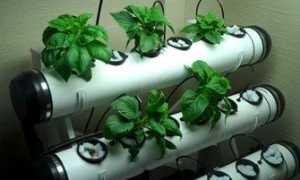 Гидропонный метод выращивания
