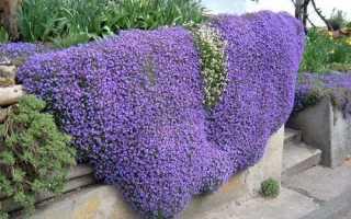 Ампельные растения для кашпо