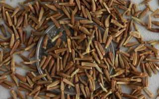 Пиретрум выращивание из семян