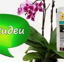 Актара для орхидей как применять