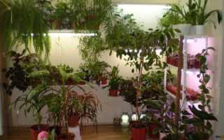 Растения мужегоны