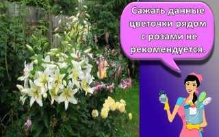 С какими цветами сочетаются лилии