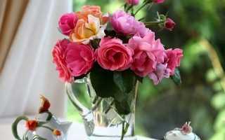 Срезанная роза дала ростки как посадить