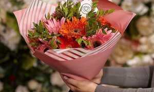 Герберы значение цветов