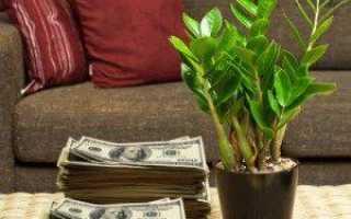 Долларовое дерево название