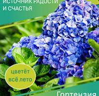 Кирказон маньчжурский