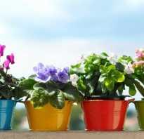 Цветы в маленьких горшочках