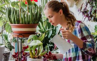 Как часто нужно поливать цветы