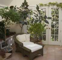 Карликовые деревья для дома