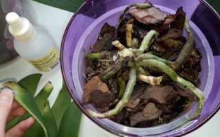 Почему орхидея сбрасывает листья