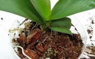 Какой самый лучший грунт для орхидей