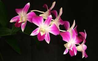 Детка орхидеи на стволе как отделить