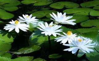 Цветы которые цветут ночью