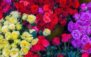 Рыжие розы