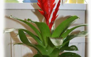 Цветок с красным цветком посередине