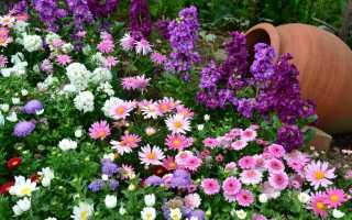 Низкорослые многолетники цветущие все лето каталог