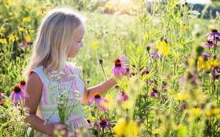 Желтые цветы на полях