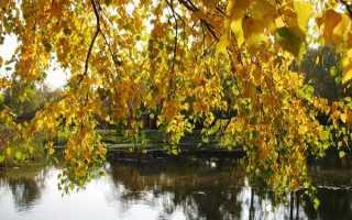 Почему опадают листья