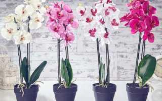 Как отделить детку орхидеи от материнского растения