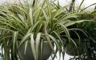 Комнатные растения которым не нужен свет