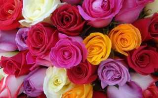 Что означают красные розы