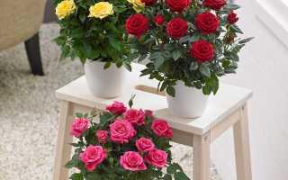 Земля для розы комнатной