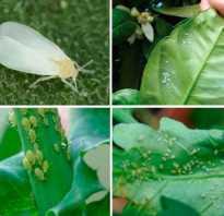 Мелкие черные насекомые на комнатных растениях