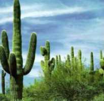 Где растут кактусы