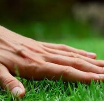 Как равномерно посеять газонную траву