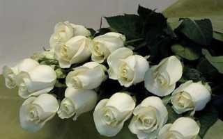 К чему дарят белые розы женщине