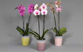 Какой грунт нужен для орхидеи