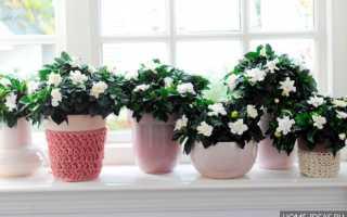 Комнатные растения цветущие круглый год неприхотливые