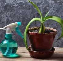 Чесночный настой для растений