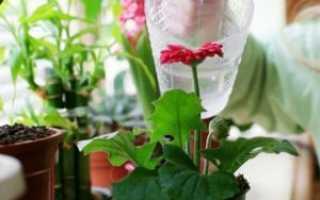Подкормка домашних цветов дрожжами