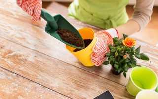Как посадить цветок в горшок