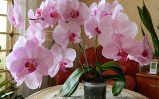 Можно ли посадить орхидею в обычную землю