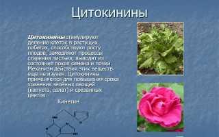 Паста цитокининовая применение