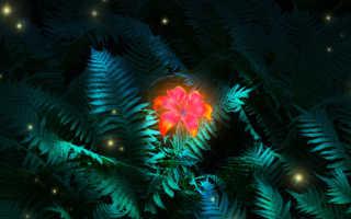 Цветущий папоротник в ночь на ивана купала