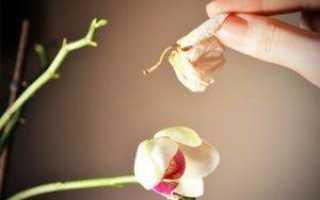 Когда орхидея отцвела что делать со стеблем
