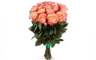 Роза кохала