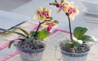 Можно ли поливать орхидею сверху
