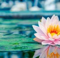 Что означает цветок лотоса
