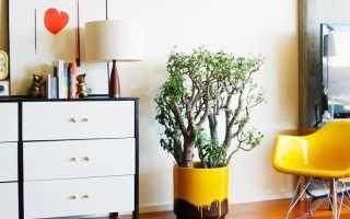 Красивые комнатные растения не требующие особого ухода
