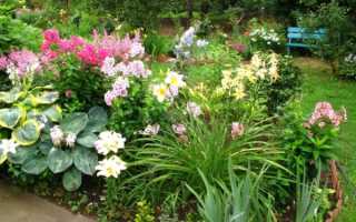 Теневыносливые многолетники для сада