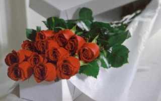Самые длинные розы