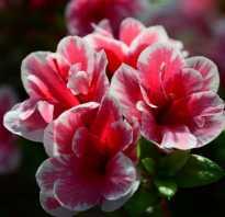 Красный цветок название