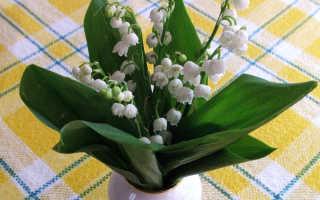 Ядовитый белый цветок