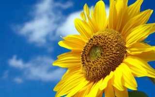 Желтые цветы названия